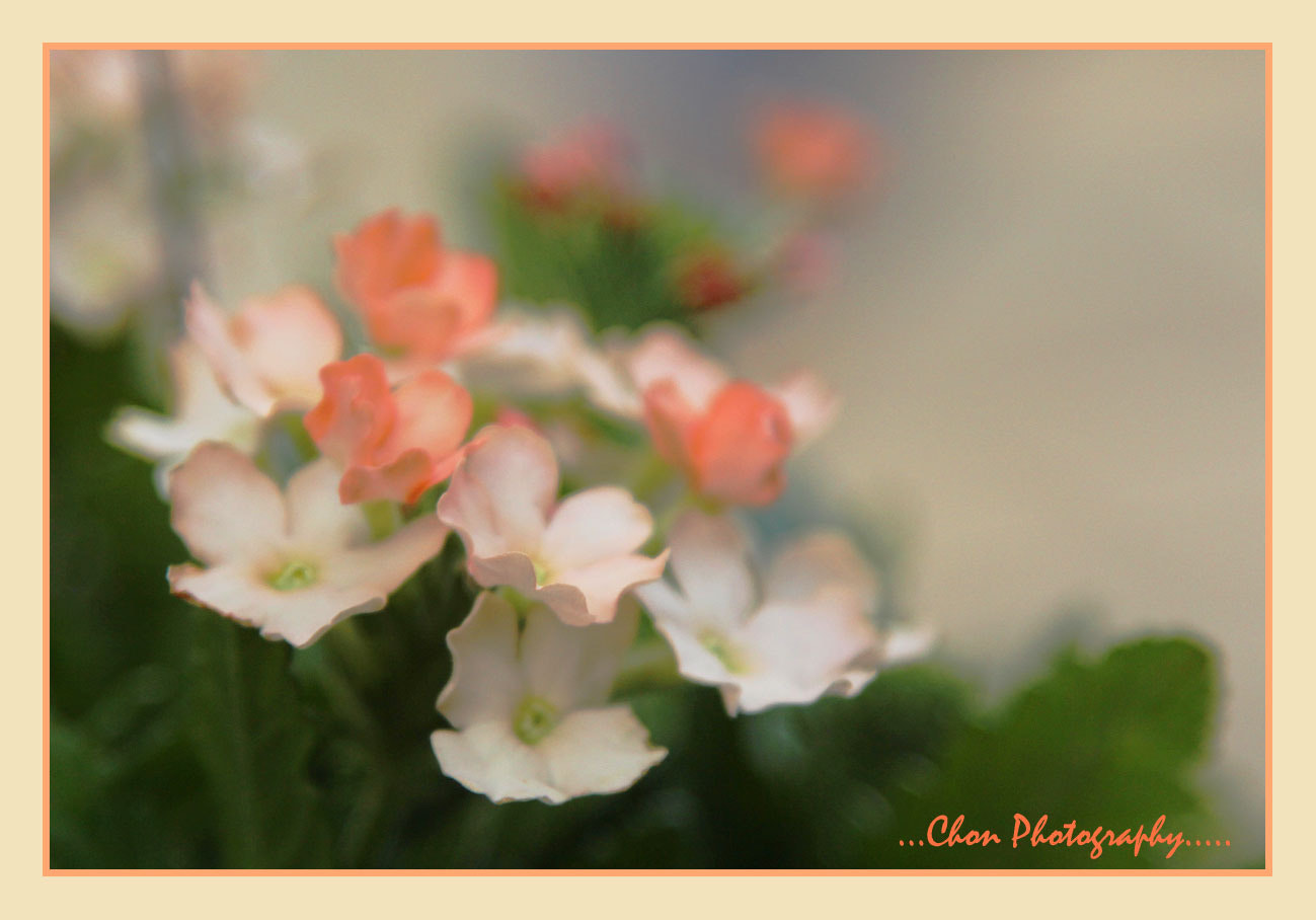 Photograph ~F-F-F~ by thicha chan on 500px