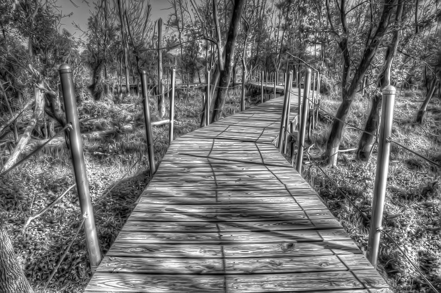 This boardwalk is in McKinney, Texas.  It was supposed to be over a lush marsh and pond but whole area was dry due to the severe drought.