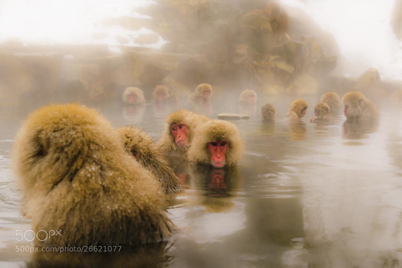 Photograph  Jigokudani Yaen-Koen by Milagros Aguirre on 500px