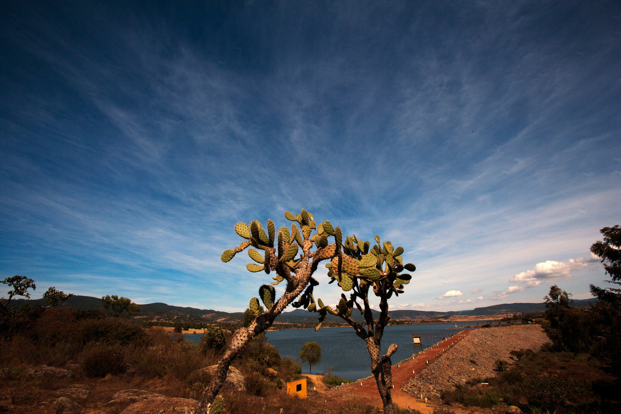 Photograph Cactus at Tapalpa by Cristobal Garciaferro Rubio on 500px