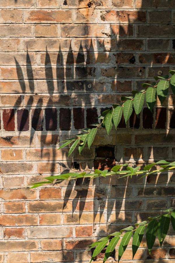 Les palmes (Palms) de Christine Druesne sur 500px.com