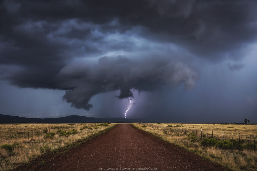 Signals by Peter Coskun Nature Photography  on 500px.com