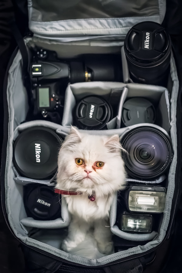 Photographer Cat by Erhan Meço on 500px.com