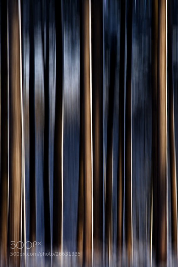 Photograph FOREST WHISPERS by Alain Delvoye on 500px