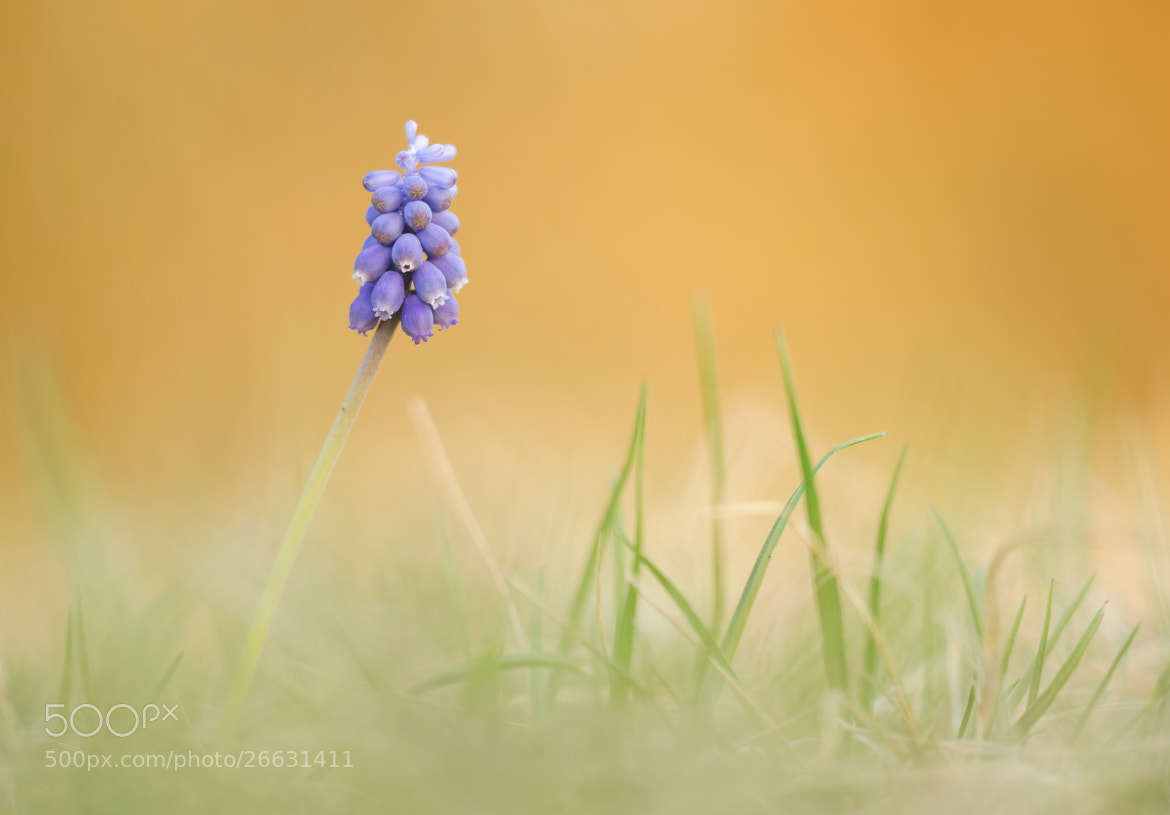 Photograph spring is coming by Gabriele Schindl on 500px
