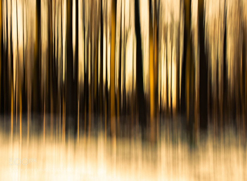 Photograph FOREST WHISPERS 2 by Alain Delvoye on 500px