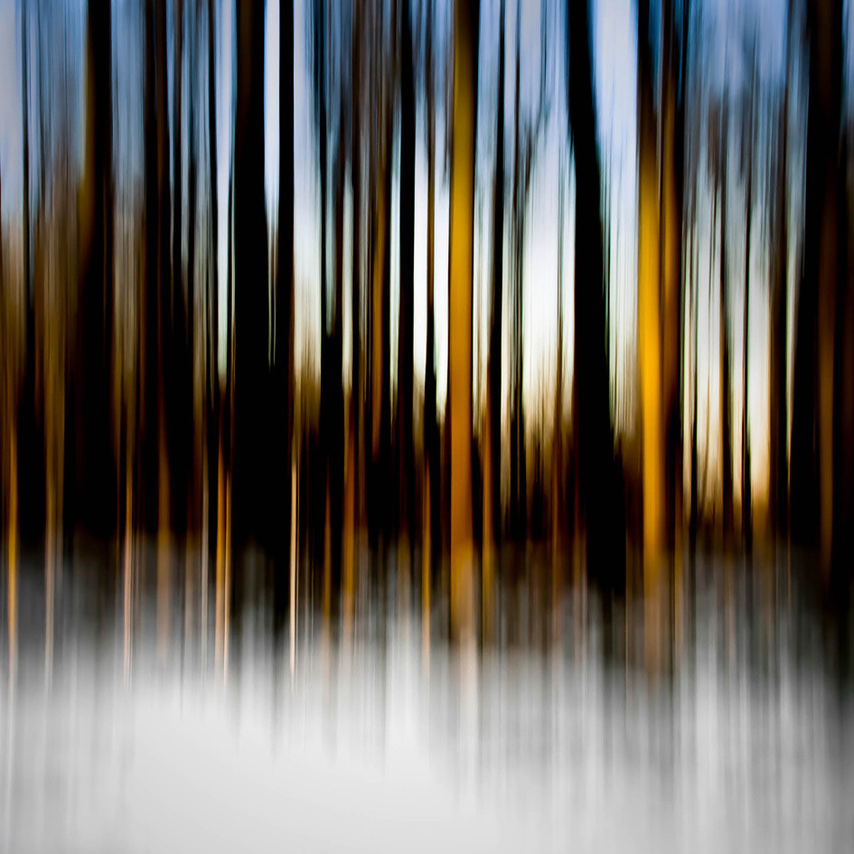 Photograph FOREST WHISPERS 3 by Alain Delvoye on 500px