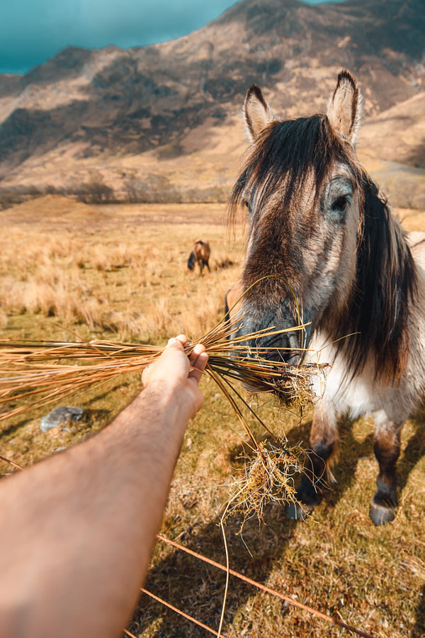 Highlands - Horse by Tony Lopez Media on 500px.com