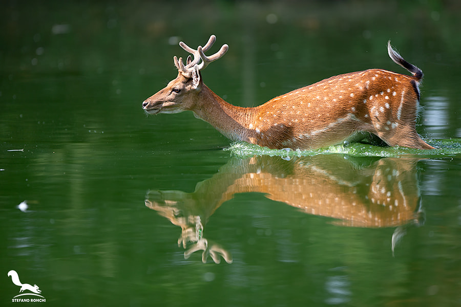 In to the water by Stefano Ronchi on 500px.com