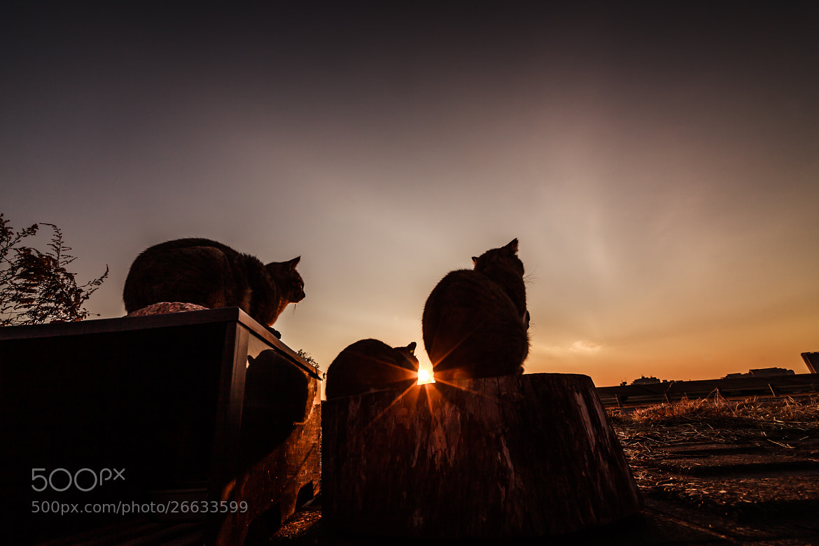 Photograph The end of a day by Seiji Mamiya on 500px