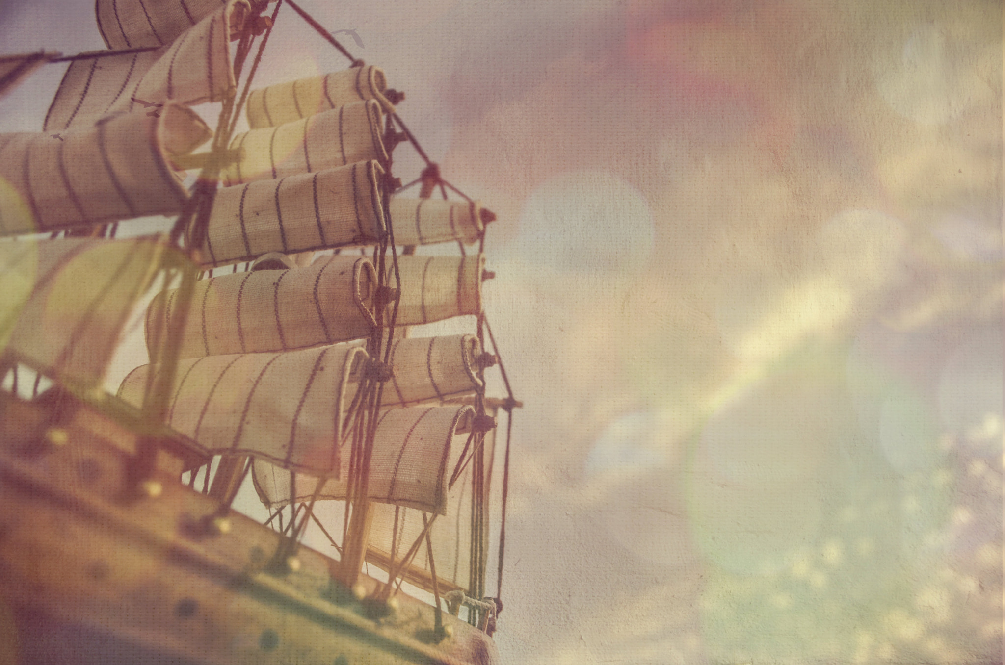 Photograph MAYFLOWER by Jess Murray on 500px