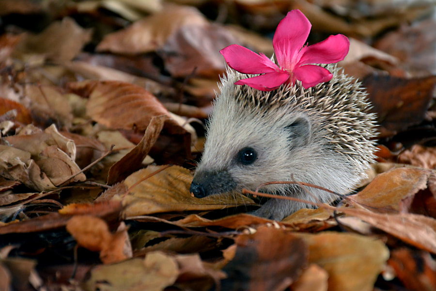 With a flower in the hair by Mirza Cengic on 500px.com