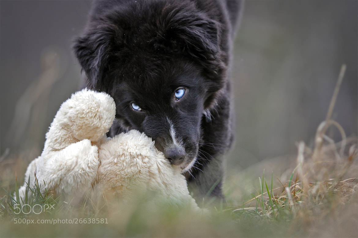 Photograph i kill the oster bunny by Mathias Ahrens on 500px