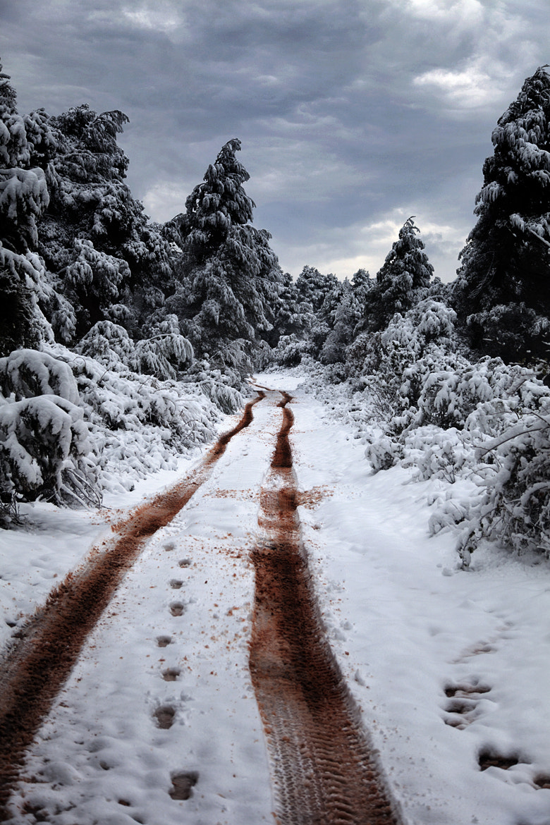 Photograph Bloody Trail by Jorge Escobedo on 500px