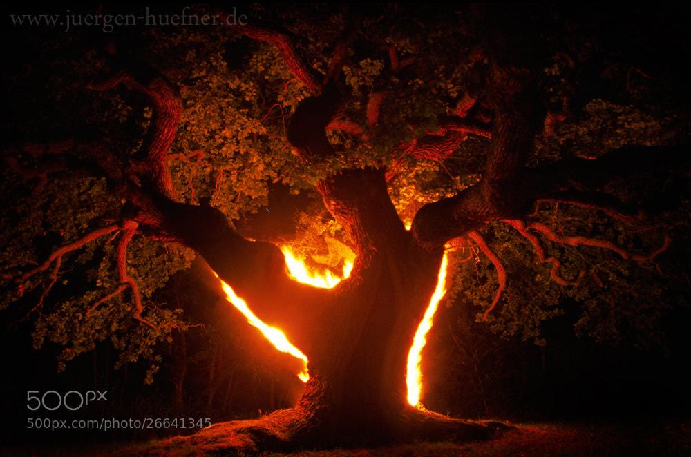 Photograph Fire oak by Jürgen  Hüfner on 500px