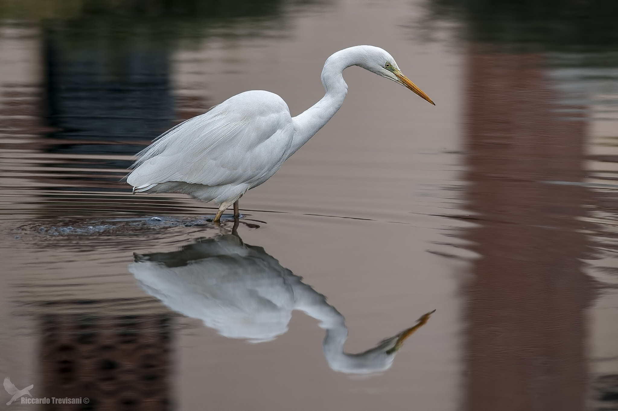 Photograph White reflections by Riccardo Trevisani on 500px