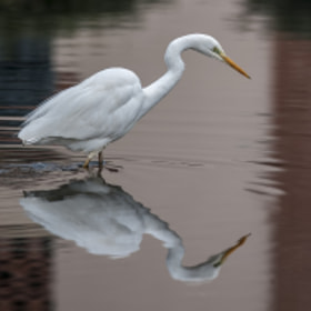 White reflections by Riccardo Trevisani (RiccardoTrevisani)) on 500px.com