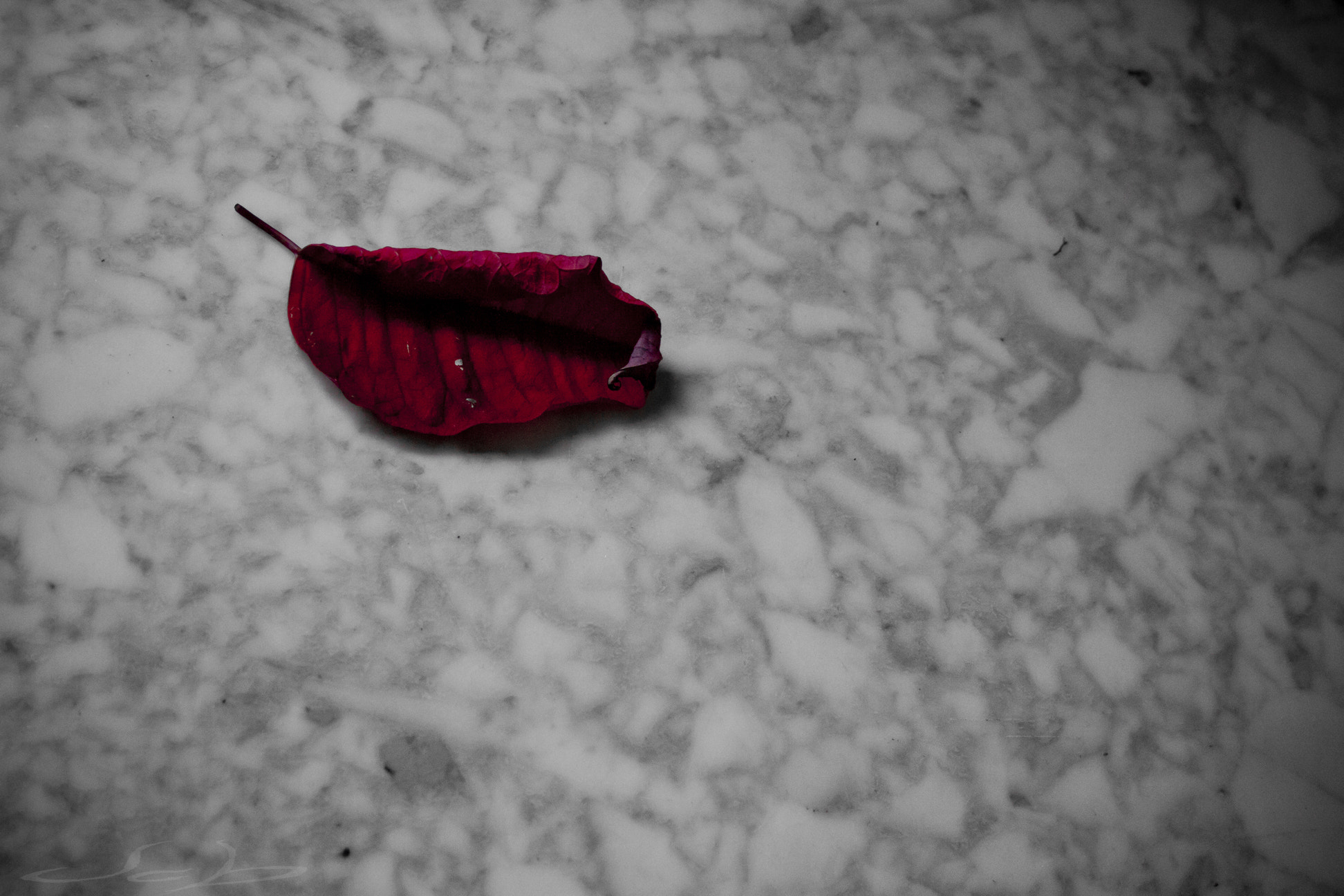 Photograph ~ red leaf 2.0 ~ by Jcb formo on 500px