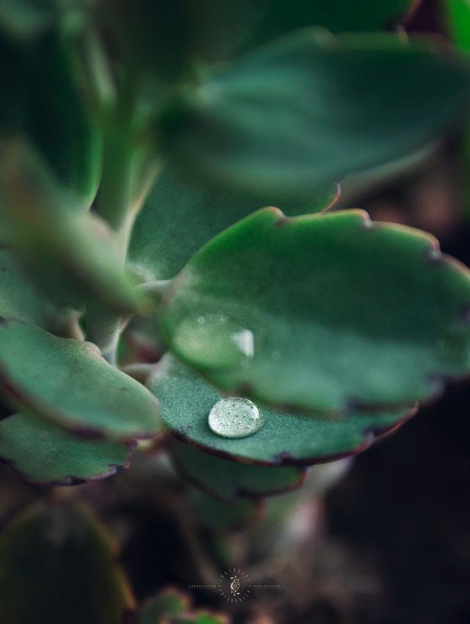 greendrop de JM Rimoldi en 500px.com