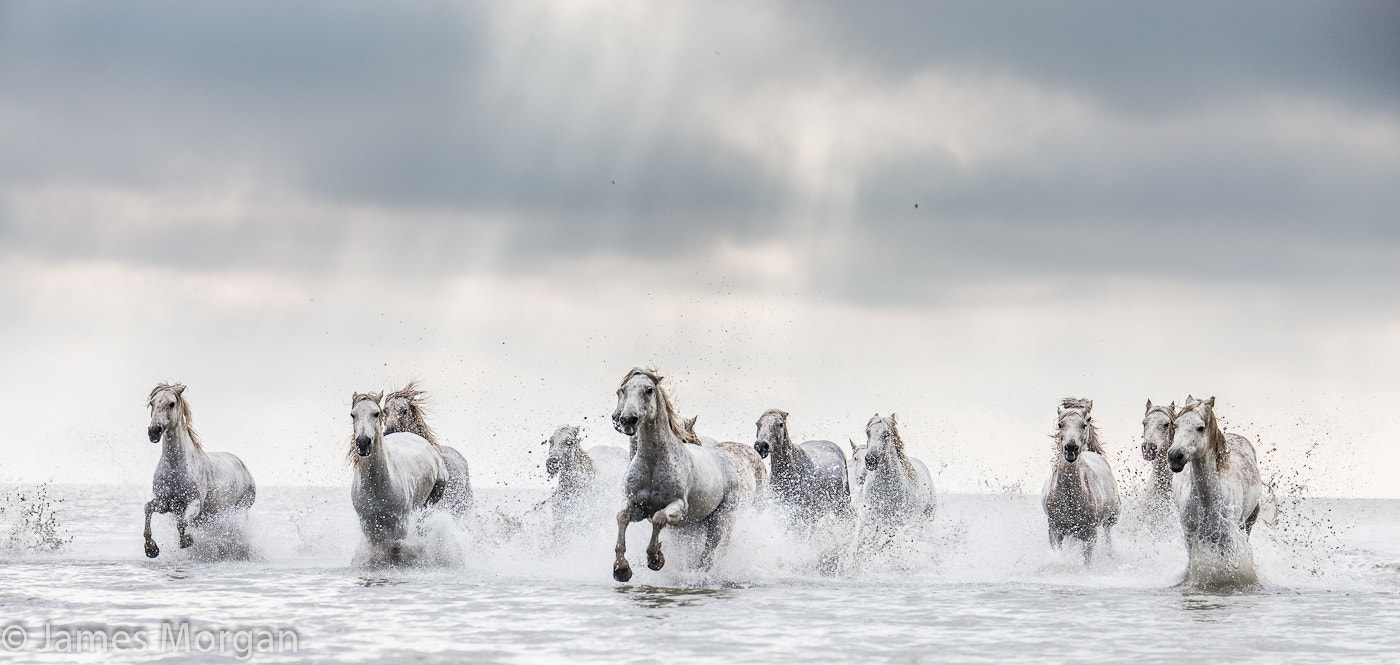 Photograph White Horses by James Morgan on 500px