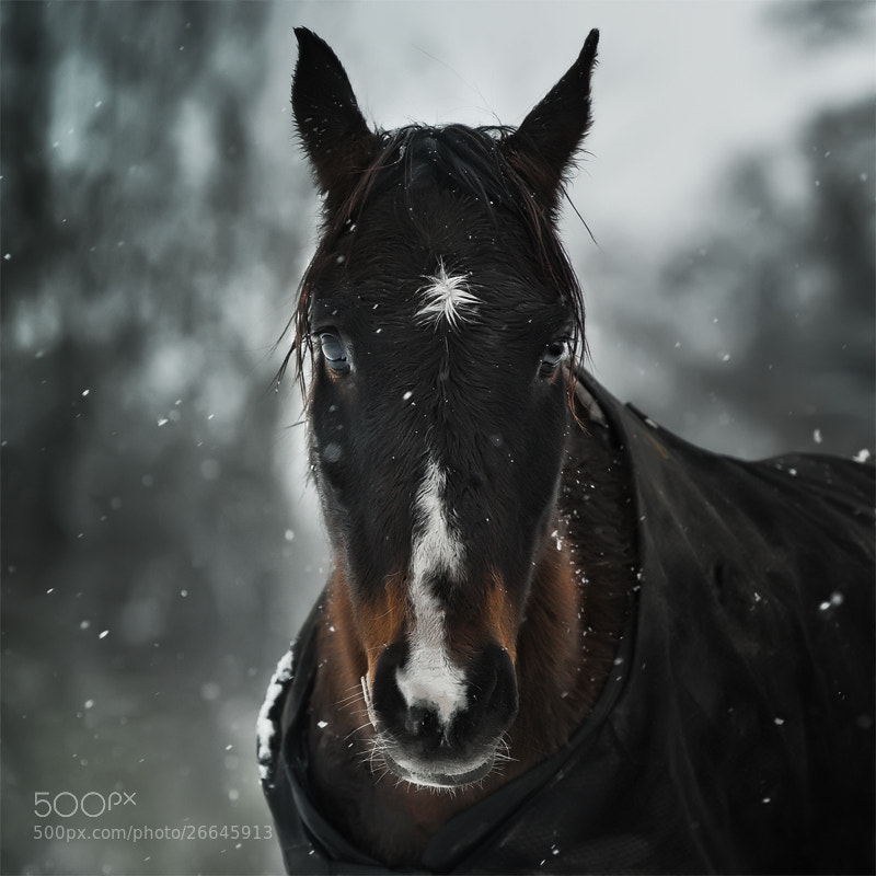 Photograph Snow flake by Cath Schneider on 500px