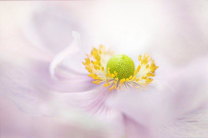 Photograph Windflower by Jacky Parker on 500px