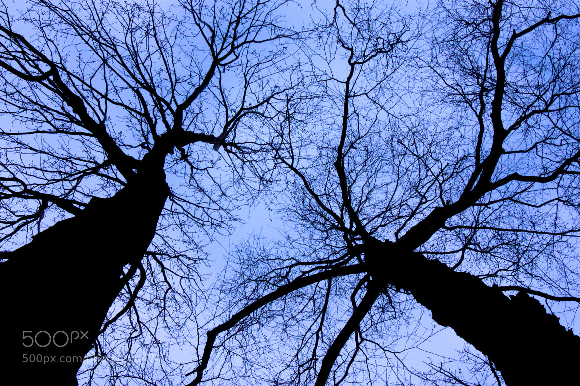 Photograph Neurons  by Russell Rahman on 500px