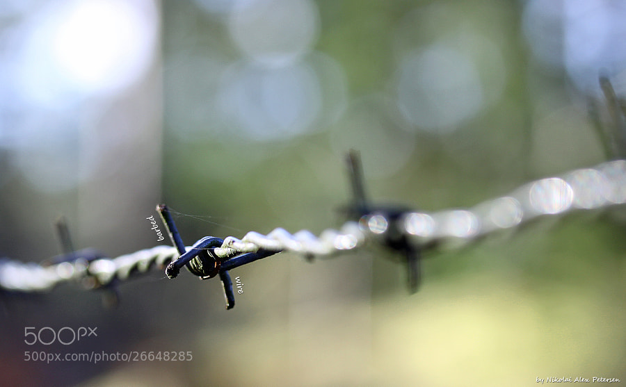 Photograph Barbed Wire by Nikolai Alex Petersen on 500px
