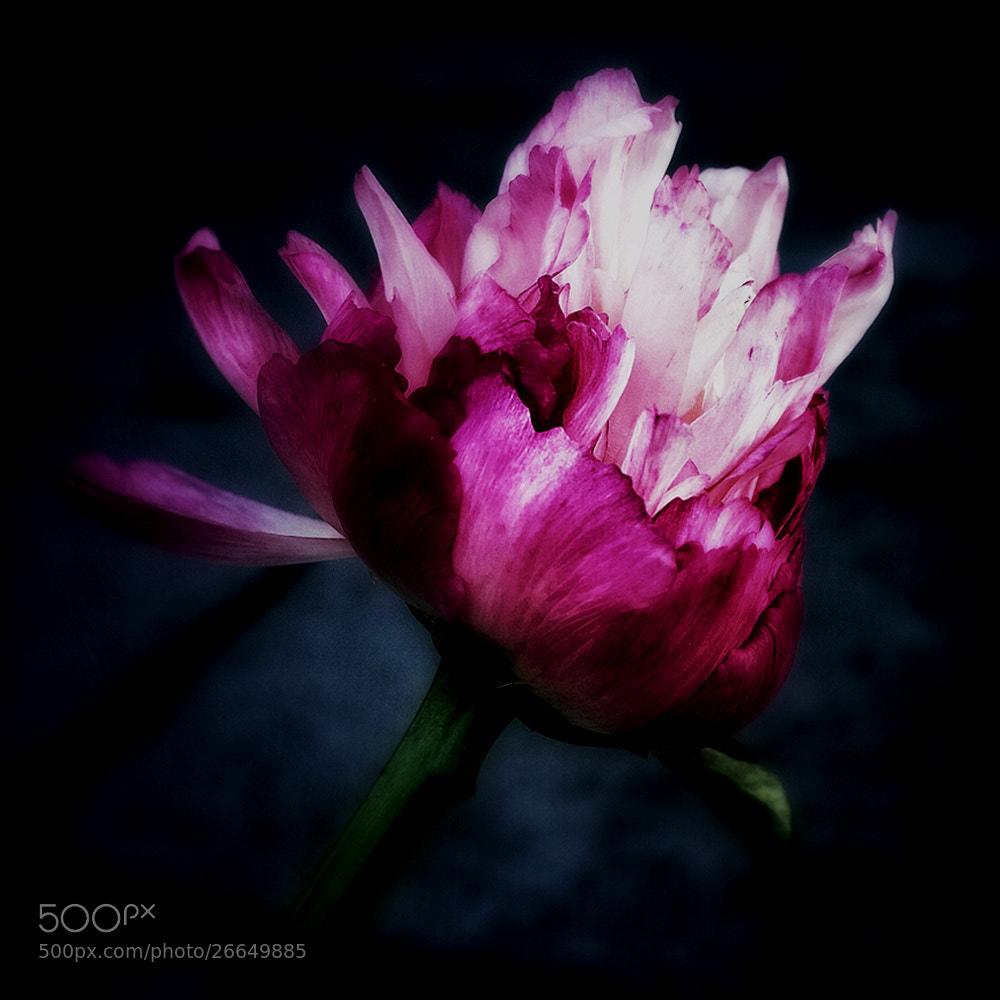 Photograph blossom... by Leila Raymond on 500px