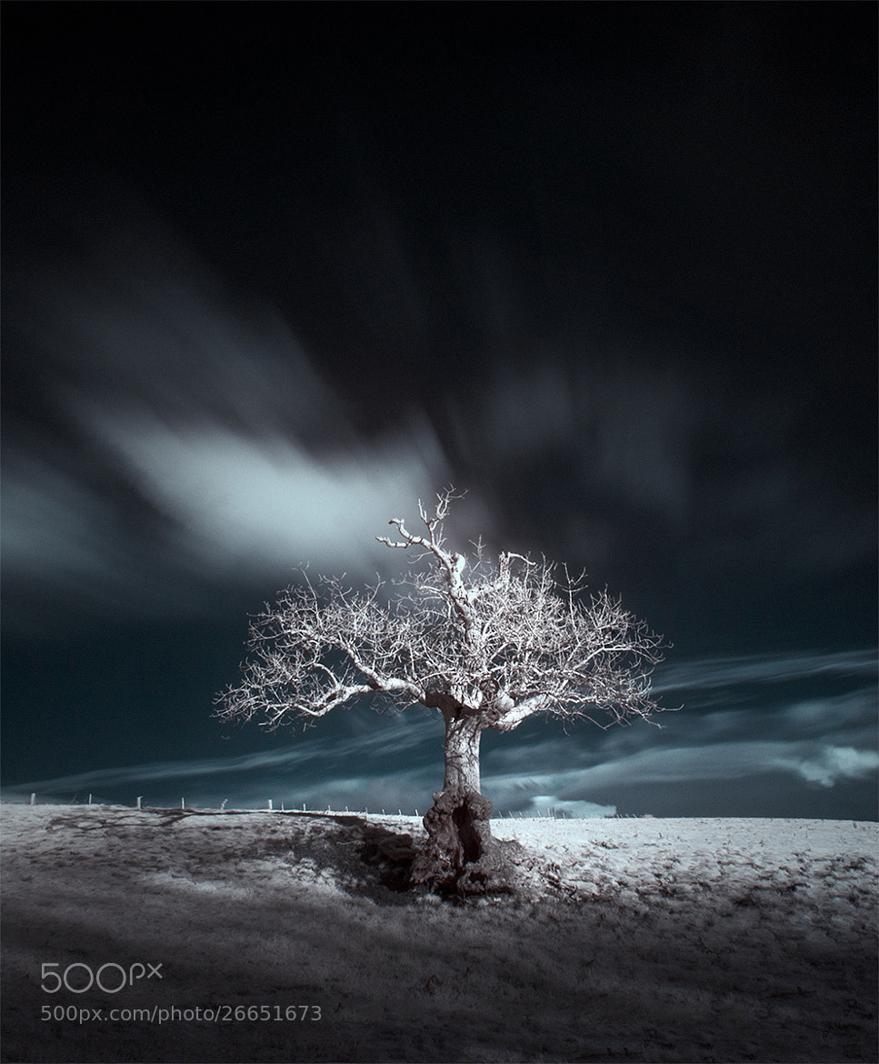 Photograph ѱ one, two, tree / 19 by Andy Lee on 500px