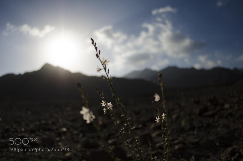 Photograph Fresh by Sreeraj M on 500px