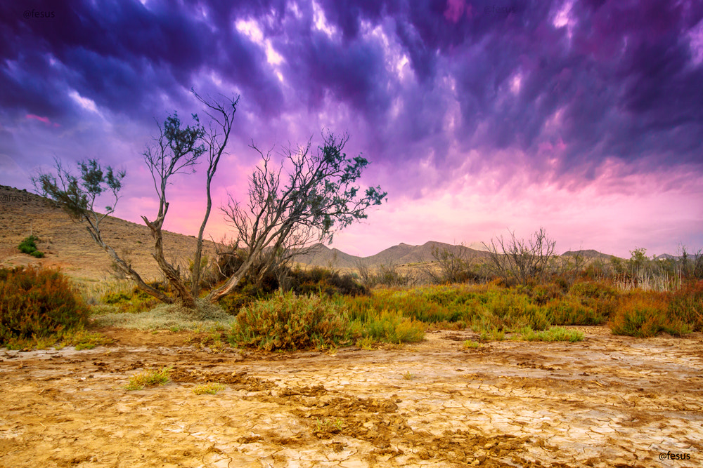 Photograph Tree near sand dunes in the desert by F Levente on 500px