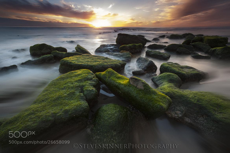 Photograph Final Light - Dog Beach by Steve Skinner on 500px