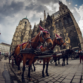 Vienna's pricy Taxis by Valentin Kouba (fotoflut)) on 500px.com