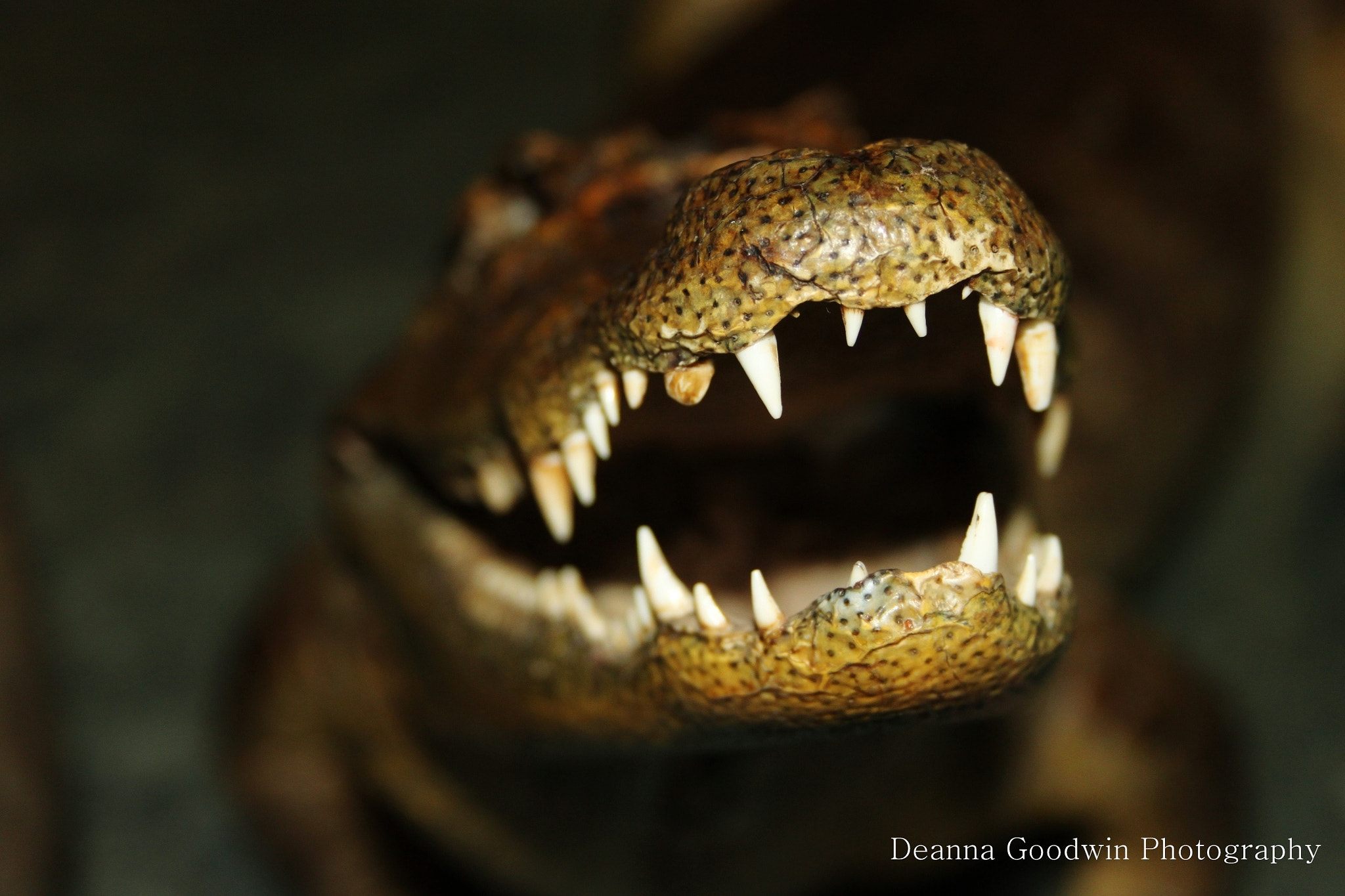 Photograph Anything in my teeth? by Deanna Goodwin on 500px