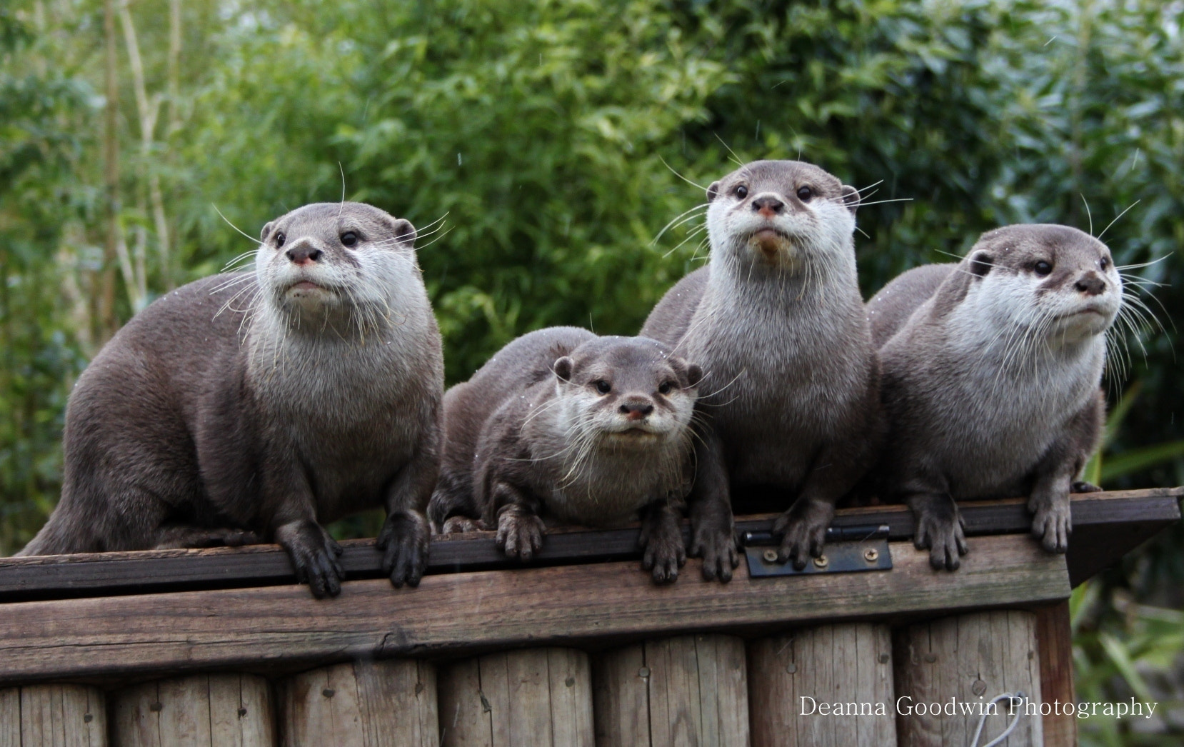 Photograph Otters by Deanna Goodwin on 500px