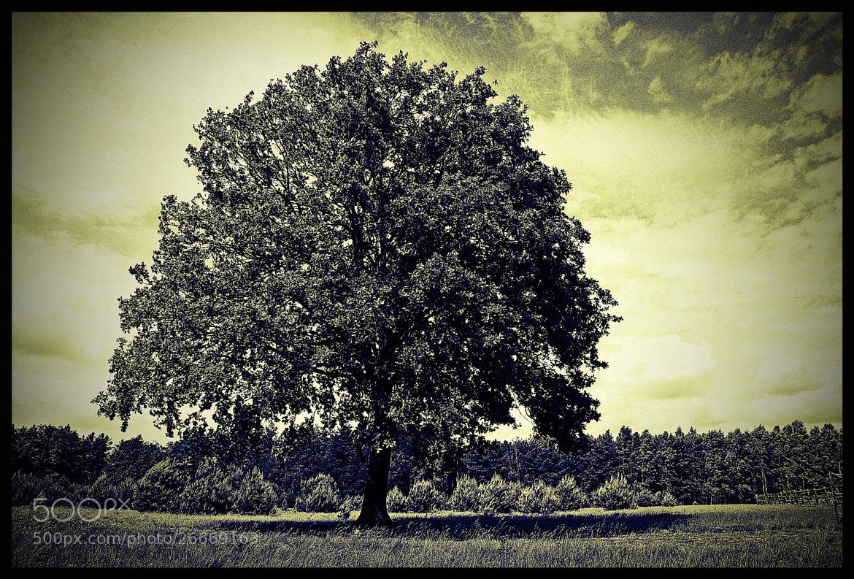 Photograph Lonely by Jarek Stroka on 500px