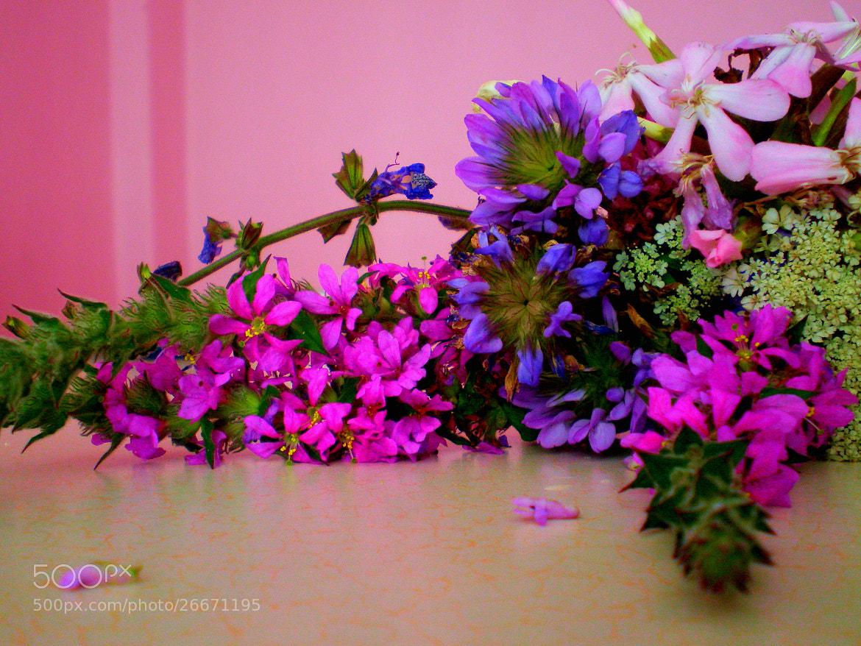 Photograph Flowers for mom by Melike Arık on 500px