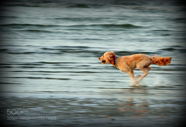 Photograph A Romantic Run on the shore... by Senthil Balakrishnan on 500px