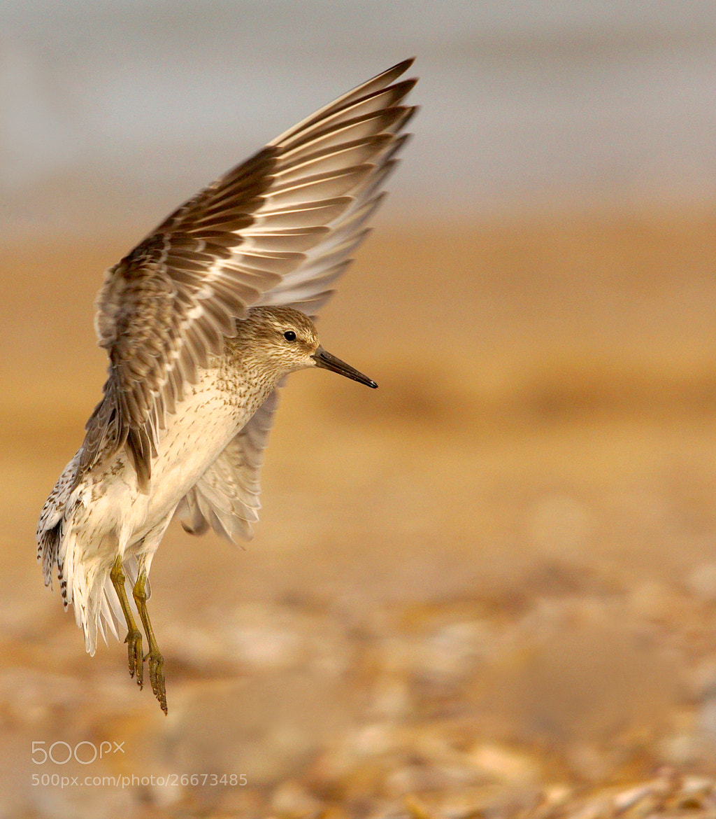 Photograph Coming In To Land by Alex Berryman on 500px