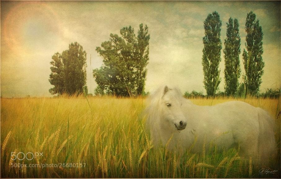 Photograph * * * by Monika Hagenah on 500px