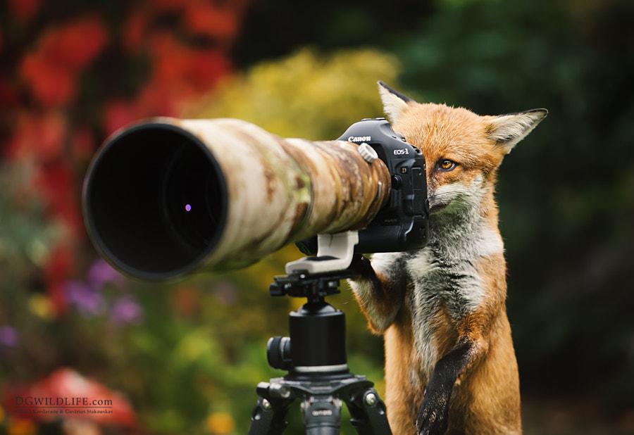 Photographer, автор — Giedrius Stakauskas на 500px.com