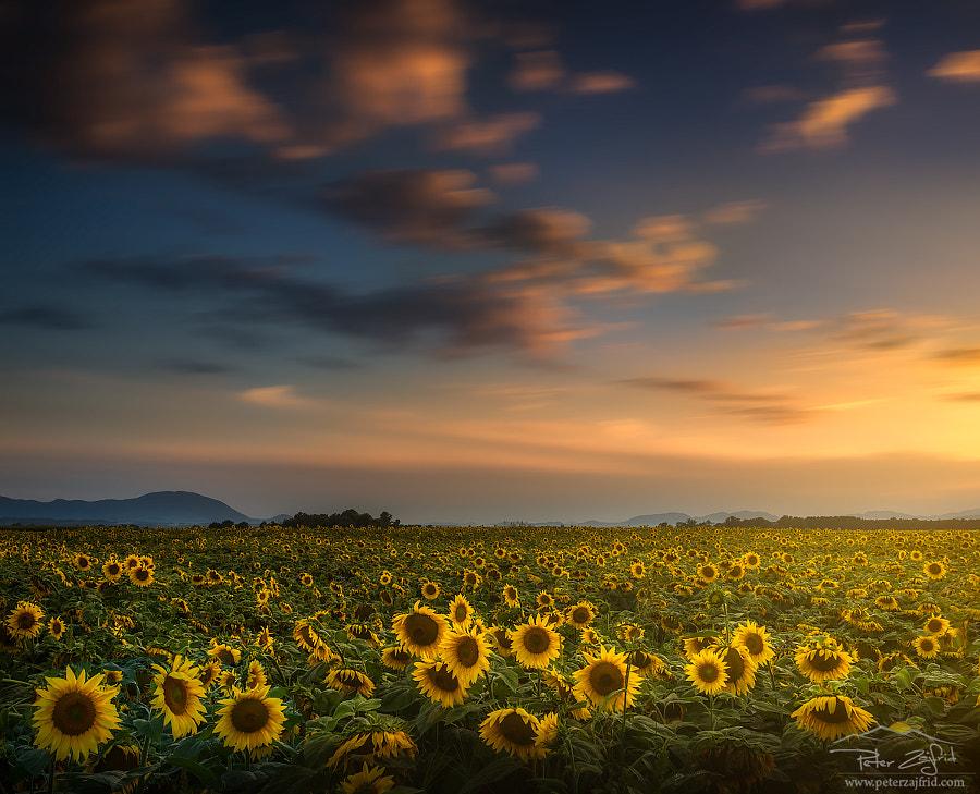 Endless summer, автор — Peter Zajfrid на 500px.com