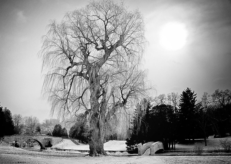 Photograph Good-looking Tree by Joseph Qiu on 500px
