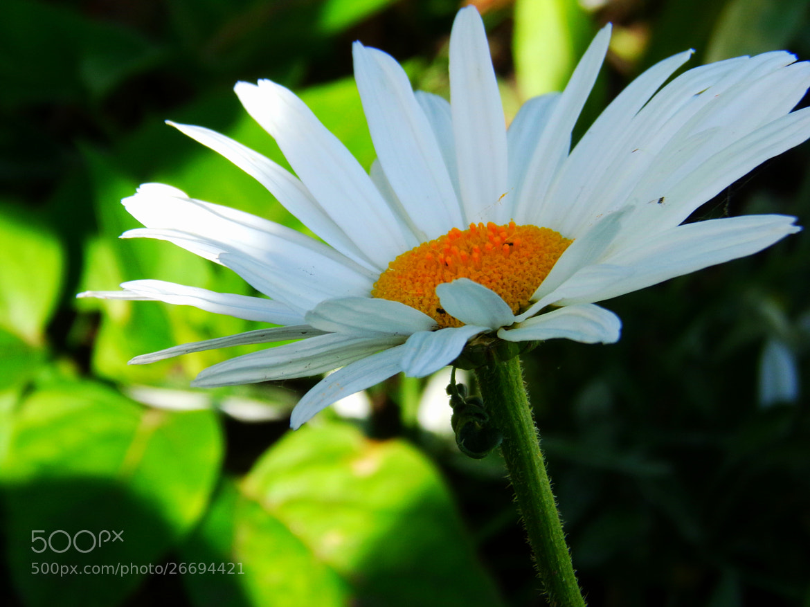 Photograph Flor* by Maxi Dodera on 500px