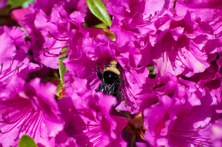 Eating, Pollinating, Resting