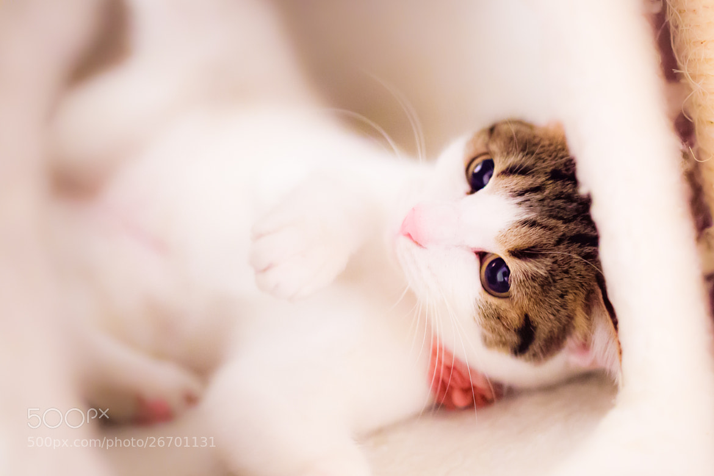 Photograph Tomboy Cat by Seiji Mamiya on 500px