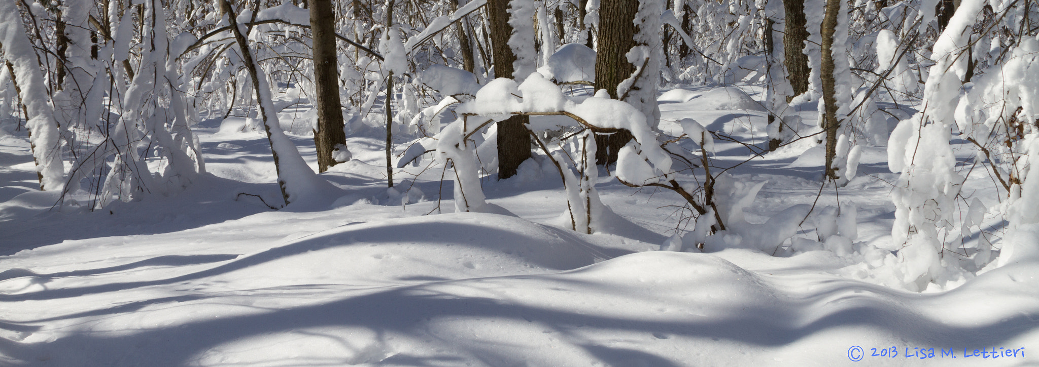 Photograph Blizzard of 2013 by Lisa Lettieri on 500px