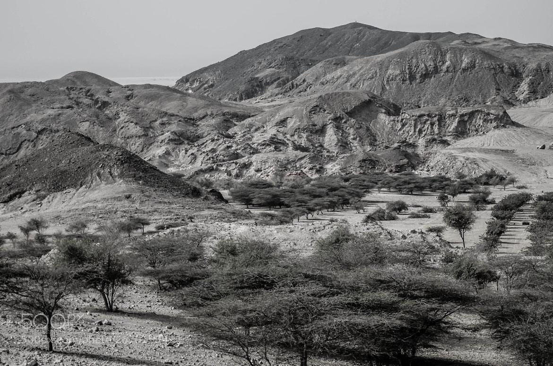 Photograph An Arabian Landscape by julian john on 500px