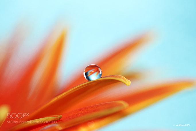 Photograph Orange Crush by Niko Vass on 500px